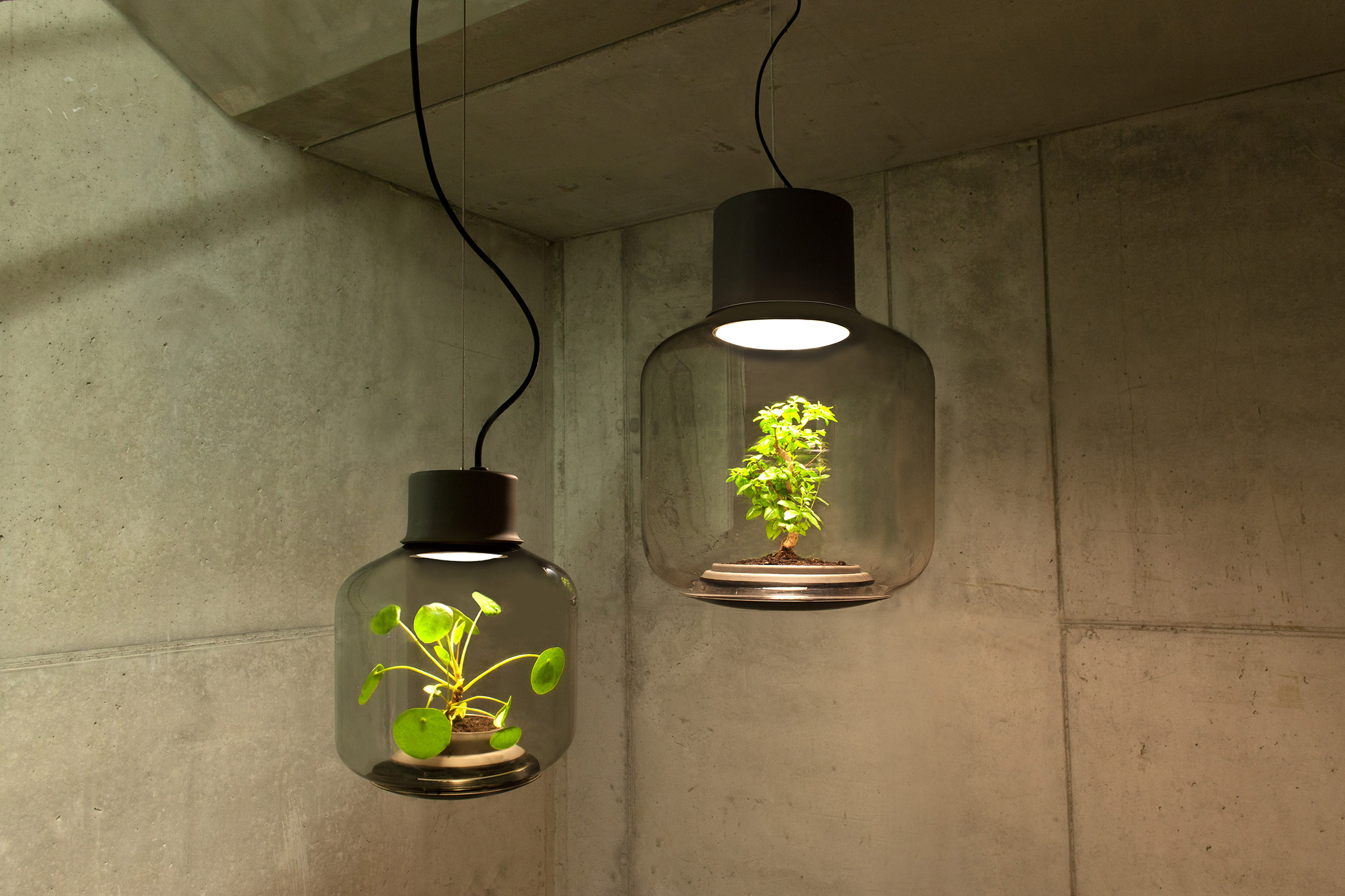 Nui Studio Find Terrarium Lamps by Nui Studio Find Terrarium Lamps by Nui Studio